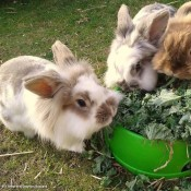 Happy rabbits with Pets at Home Offer